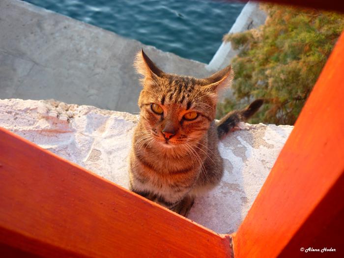 Reisefotografie Katze Rhodos