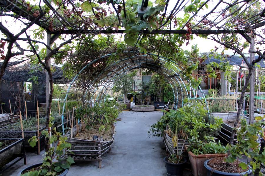 Urban_Gardening_Bangkok