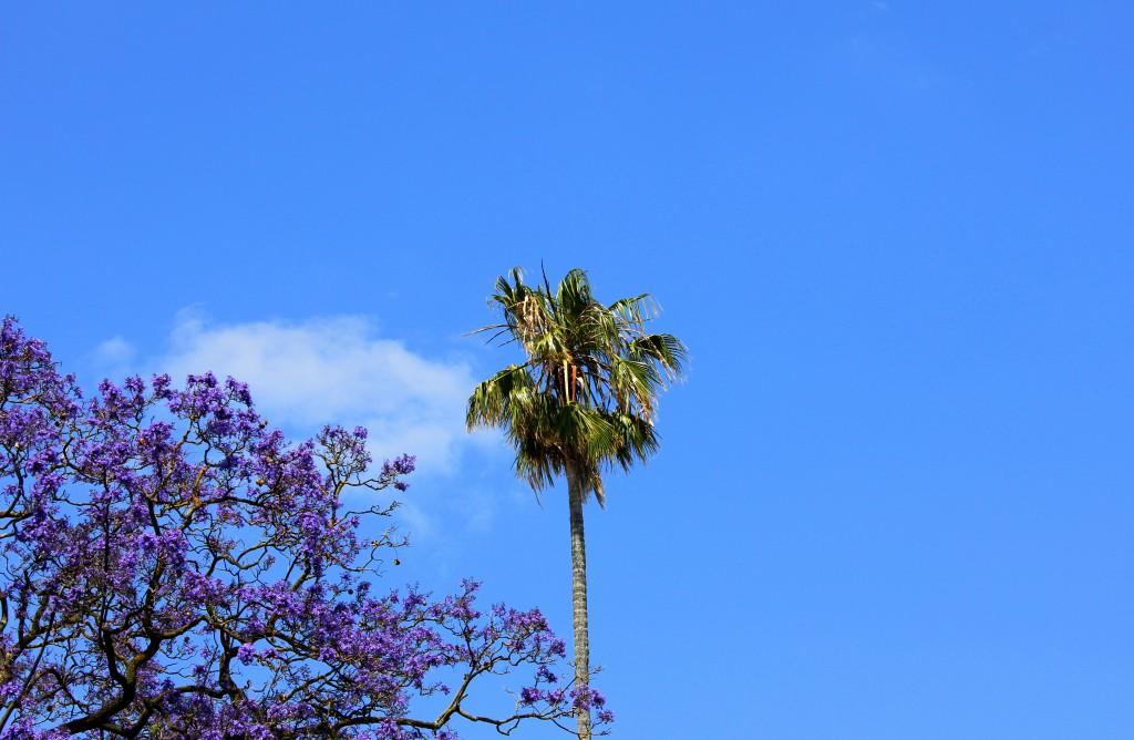 Palme Lissabon