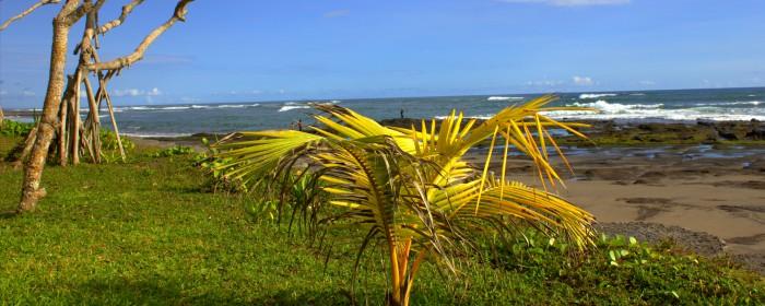 Pflanze und Bäume Strand