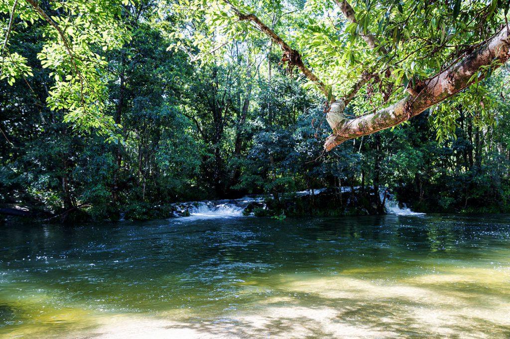 australien-bloggertipps-regenwald-daintree-nationalpark
