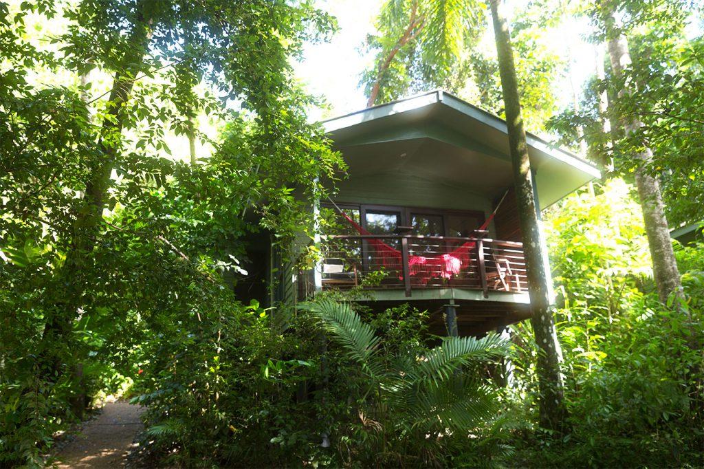 australien-bloggertipps-regenwald-daintree-nationalpark-silkyoakslodge