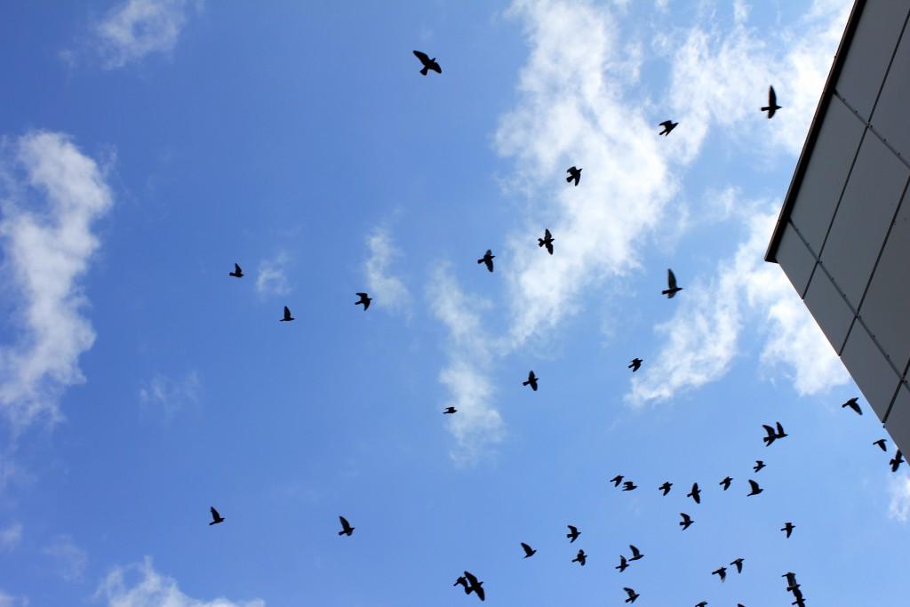 birds-in-the-sky