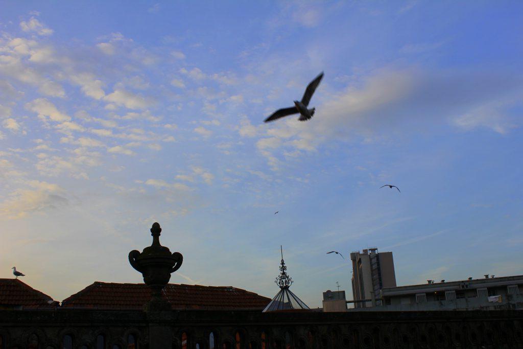 Porto abends Vögel