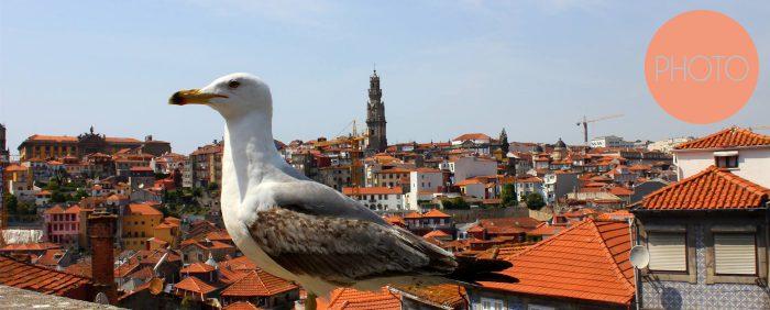 Titelbild_Porto_Bilder