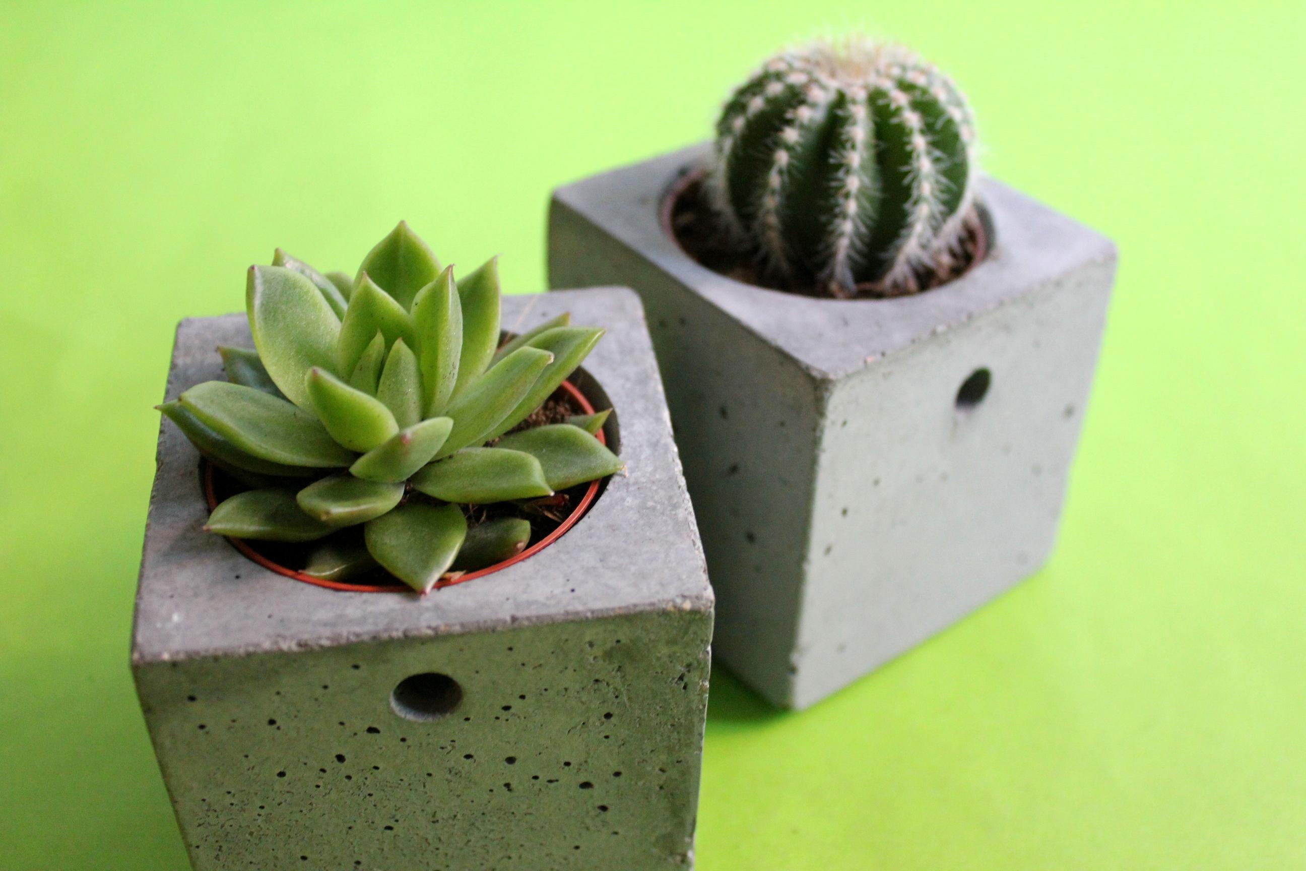 Zimmerpflanzen Sukkulenten zimmerpflanzen für vielreisende evrgreen so nah und so fern
