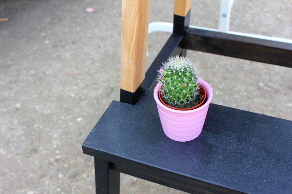Odonien Kaktus