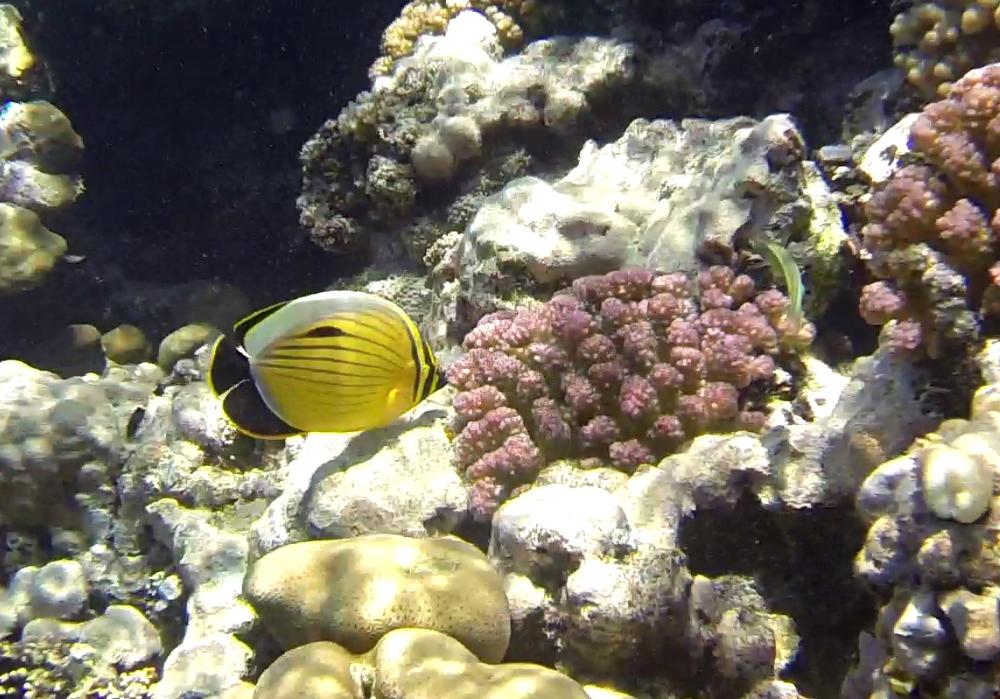 Ägypten Unterwasserwelt