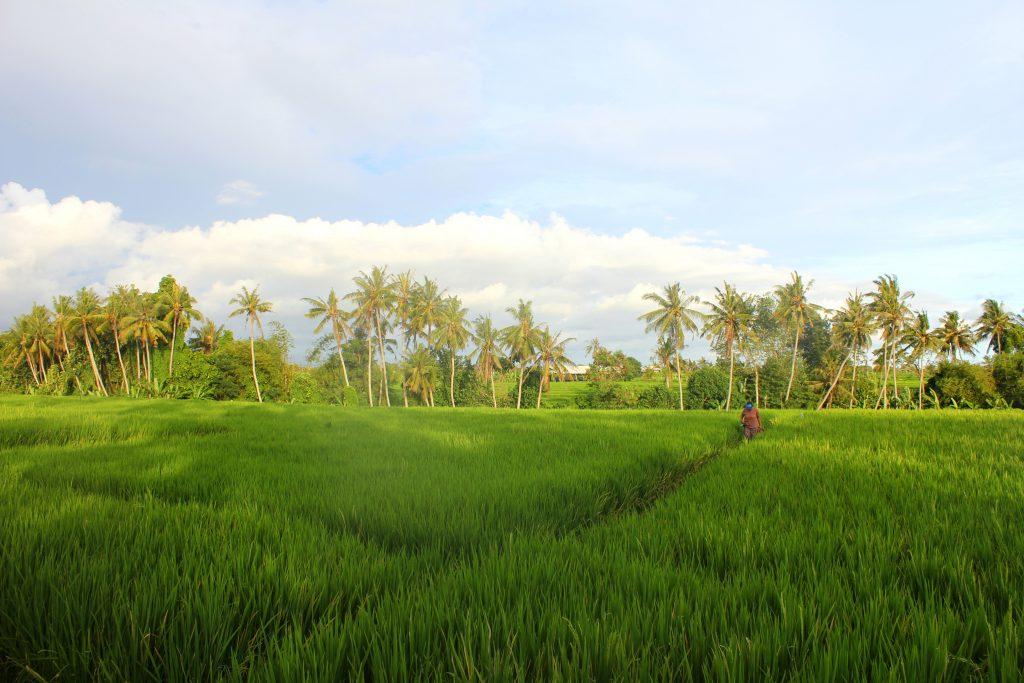 Bali Fernreisen
