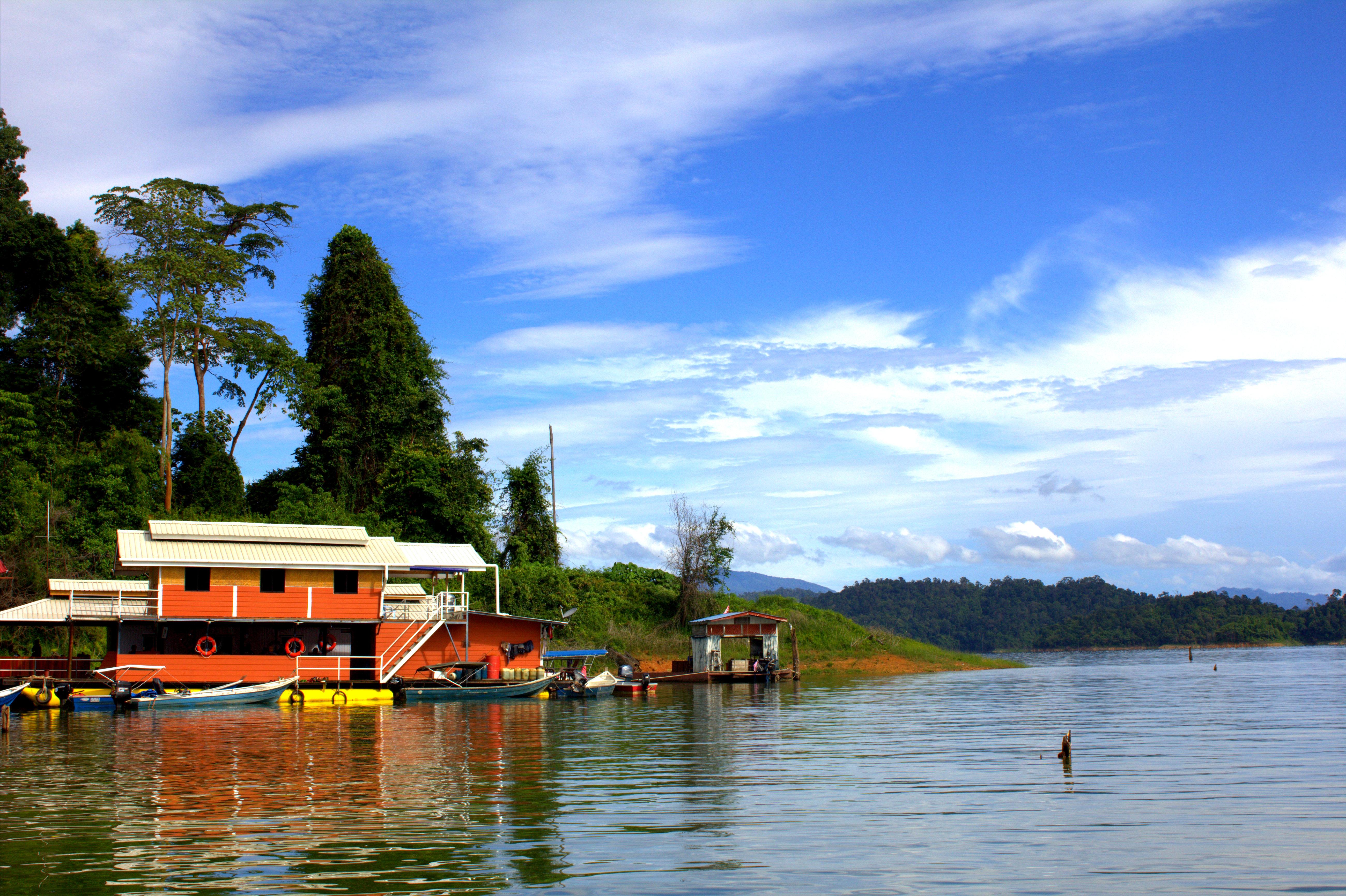 Malaysia Rainforest