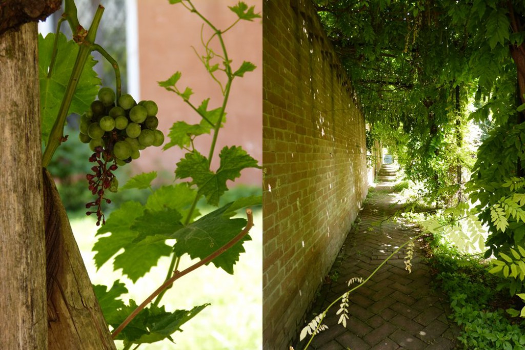 Weintrauben und grüne Wege durch Venedig