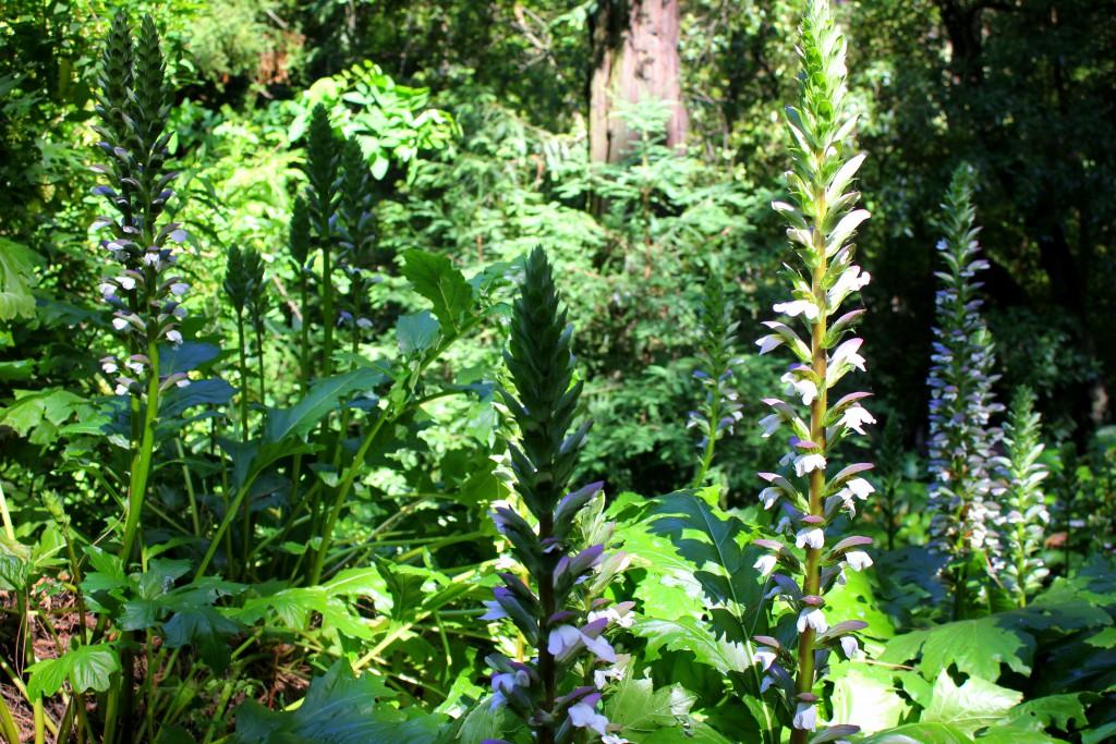 Urwald Botanischer Garten