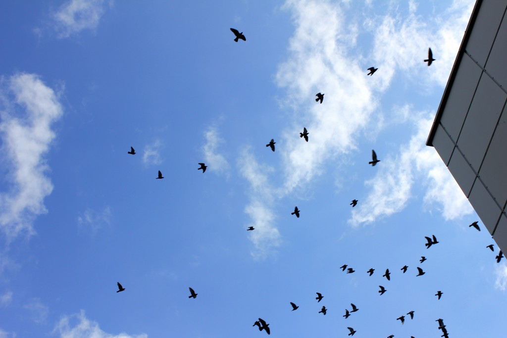 birds-in-the-sky