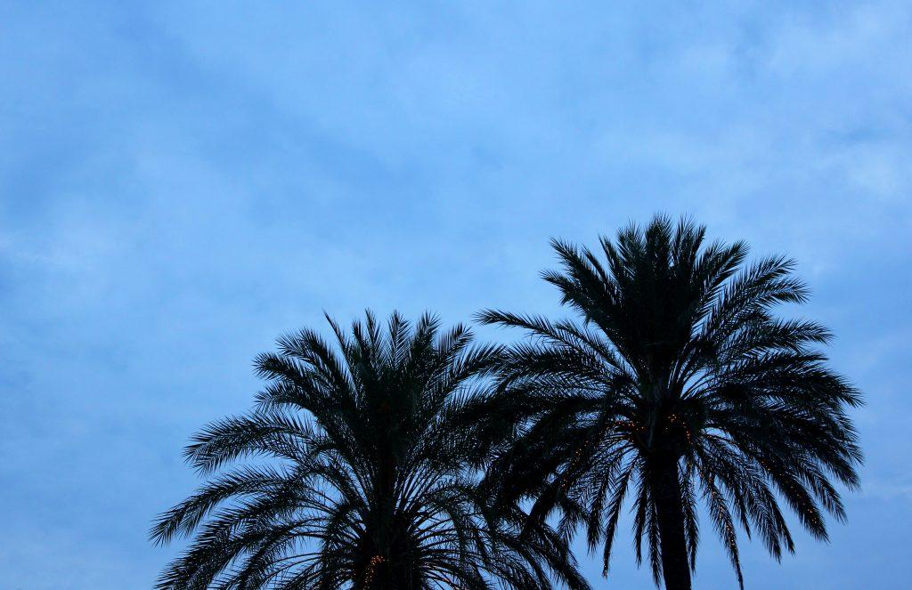 javea-palmenhimmel