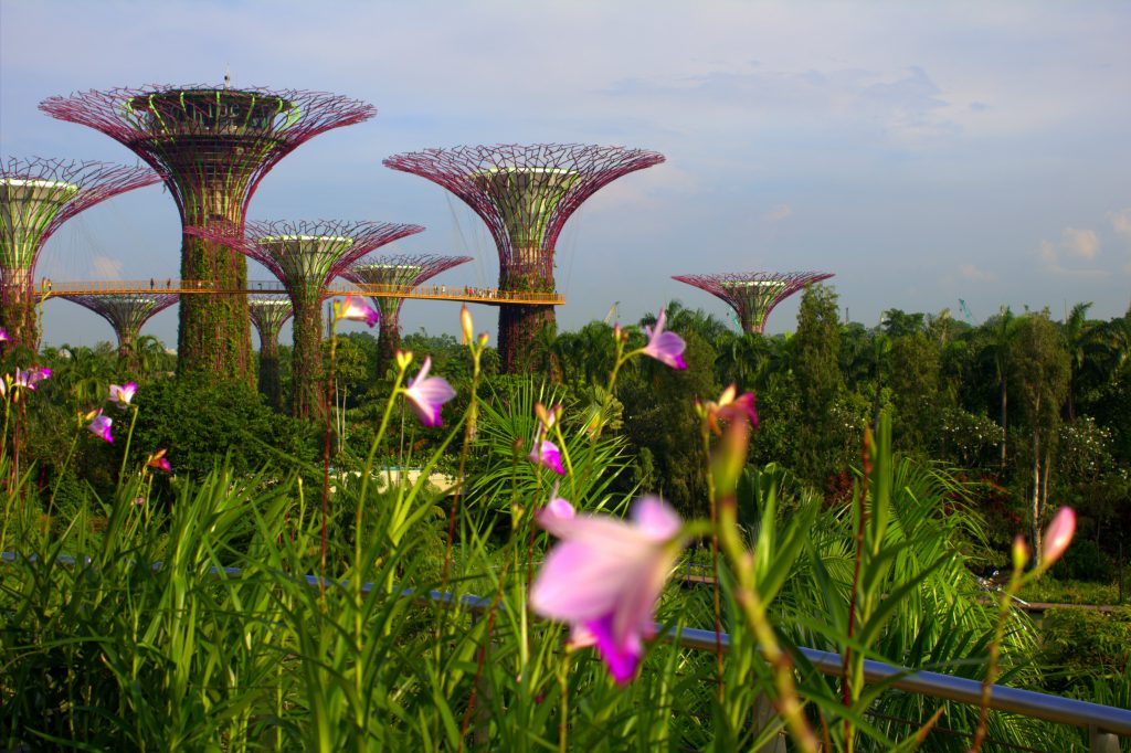 singapur-gardens-by-the-bay-mit-blumen2