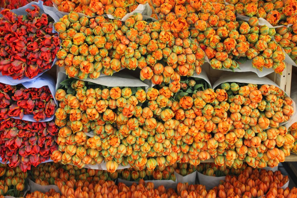 Bunte Tulpen sind wohl auch eine Sehenswürdigkeit in Utrecht