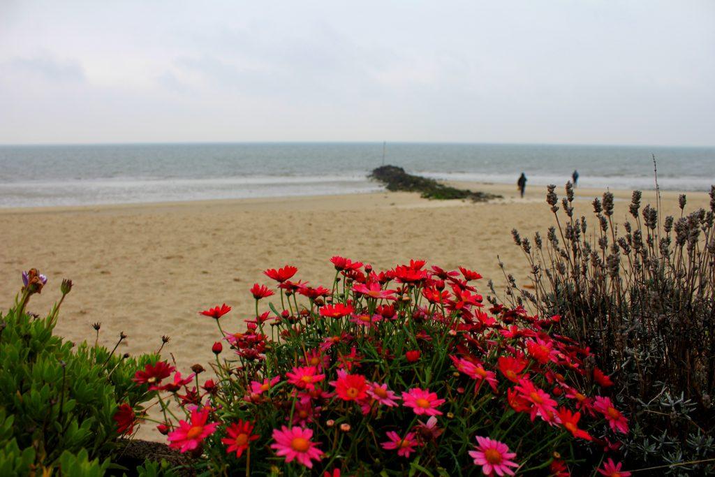 Strand Föhr Blumen