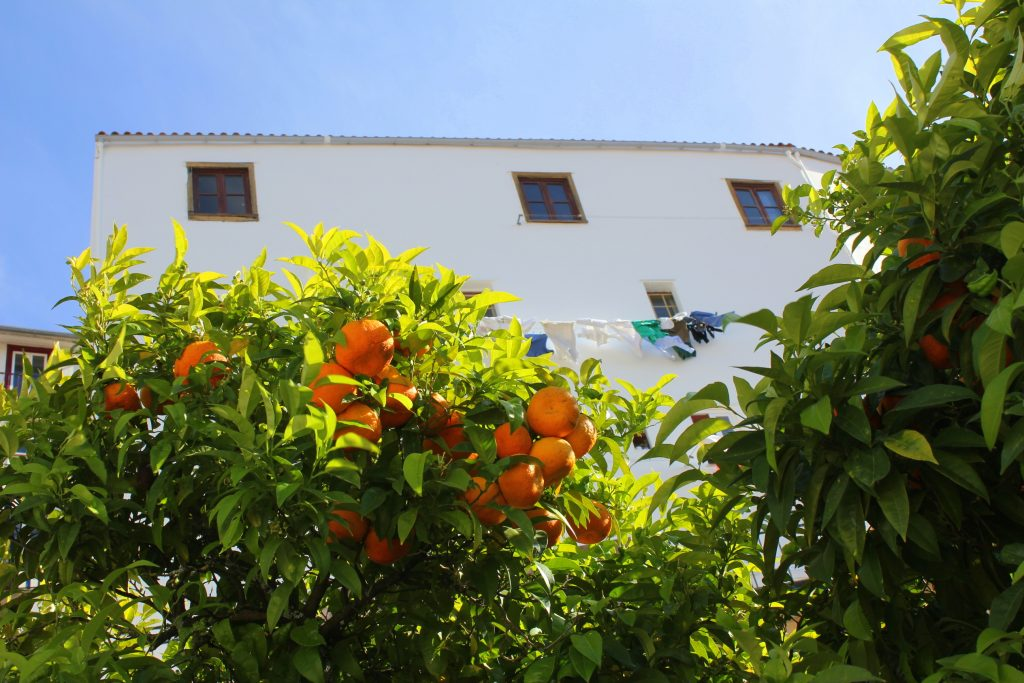 Coimbra Orangenbäume