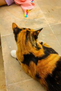 Katze Tunesien