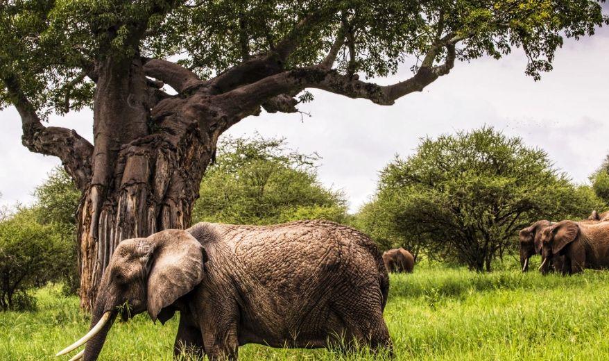 tansania elefanten